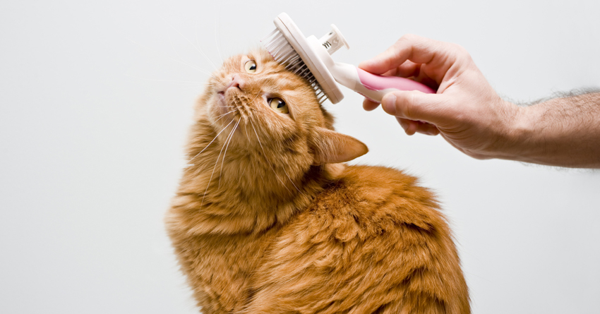 Best Brush For Long Hair Cat